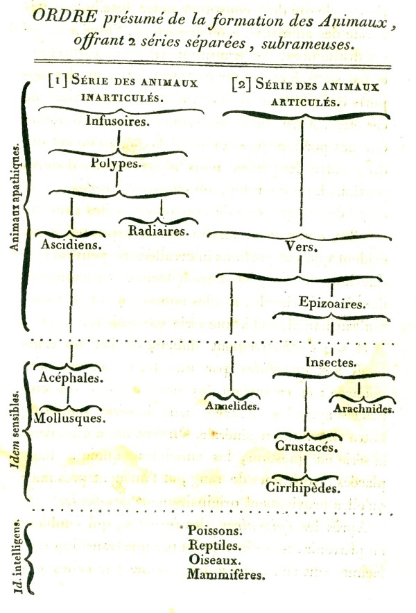 how to tell if phylogenetic trees are the same
