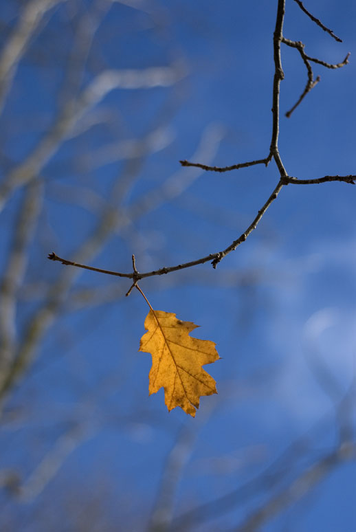 the last leaf reflection Today is a sad day for the medical community and especially at emory after a long life and influential career of caring for patients and teaching us how to do the.